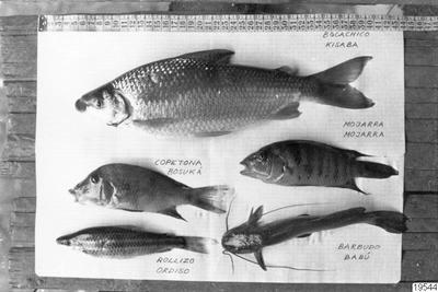 fisk, mat, fotografi, photograph@eng
