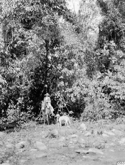 kvinna, skog, åsna, hund, fotografi, photograph@eng