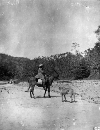 hund, åsna, flodstrand, kvinna, fotografi, photograph@eng