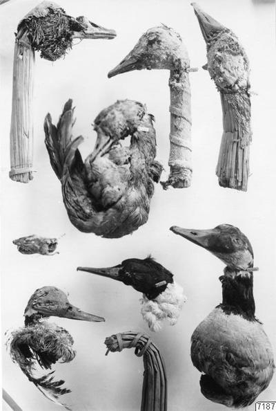 fågelvättar, fotografi, photograph@eng