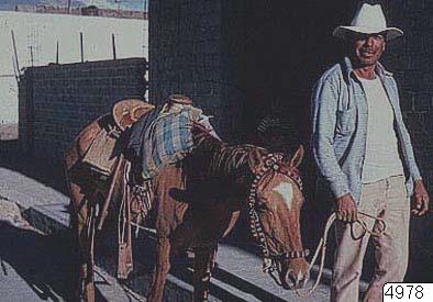 Lantbruksarbetare, häst, fotografi, photograph@eng