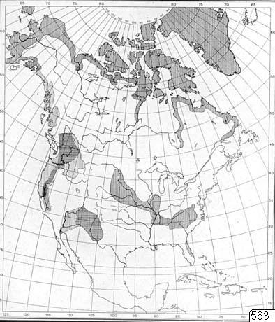 Karta, Nordamerika, Karta, map@eng