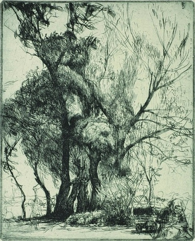 Mátyásföldi fák