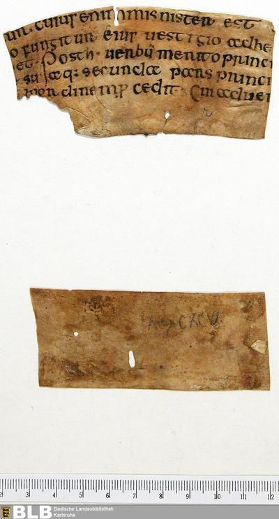 Fragment - Aug. Fr. 131