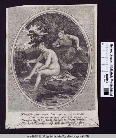Narcissus fieri cupit, hanc qui cernit in undis, Quo se felicem mergat Amoris aquis. Narcissus sturzt sich selbst verliebt in Strom hinein, Wer diese Schönheit sieht, will ein Narcissus seijn.