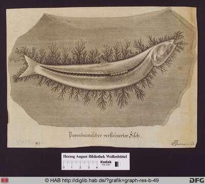 Versteinerter Papenheimischer Fisch