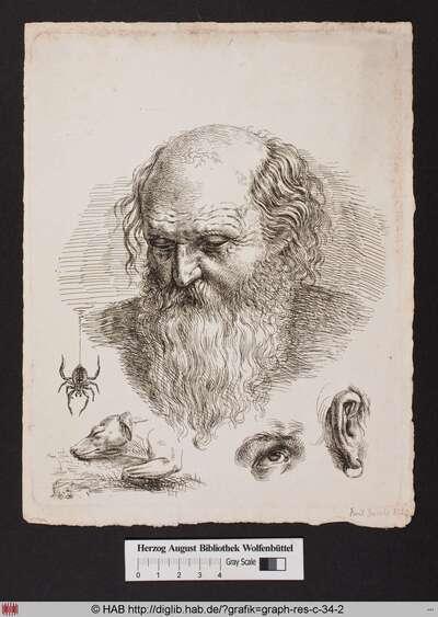 Das Bildnis eines bärtigen Mannes mit gesenktem Blick, und verschiedene Studien von einer Spinne, einem liegenden Hund, einem Auge, einem Ohr, das mit einem Ohrring geschmückt ist, und dem Profil eines menschlichen Kopfes.