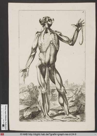 Darstellung eines Mannes in der Frontalansicht mit nach hinten geneigtem, aufgeklappten Schädel, dessen Haut sich in einzelnen Partien vom Körper schält und den Aufbau der Muskeln und Knochen und freilegt.