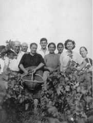 EL FAR D'EMPORDÀ - Grup de veremadors enmig d'una vinya.