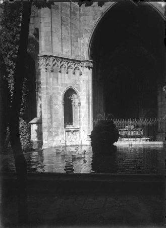 Bassa de la Catedral de Barcelona.