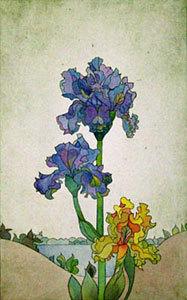 Iris am See