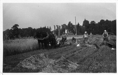 Labības pļauja Straupes pagastā