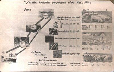 Galgauskas pagasts. Lopkopības perspektīvais plāns 1955. - 1960.gadam