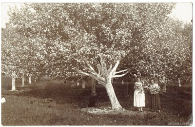 Divas neatpazītas meitenes pie ziedošas ābeles