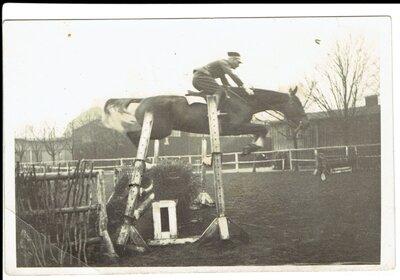 Zirgu sports