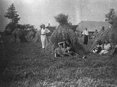 Rudzu pļauja Mazsalacas Kļaviņās