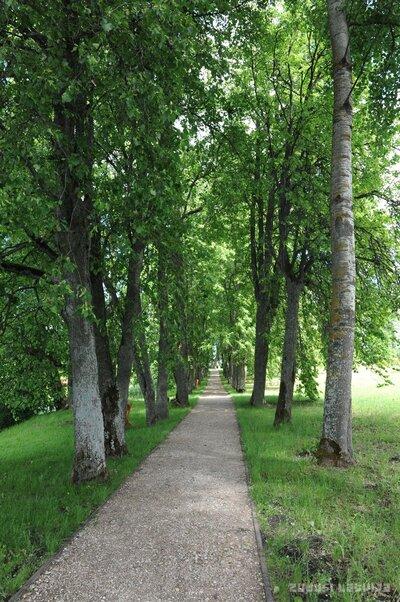 Aleja Jaunmoku pils parkā