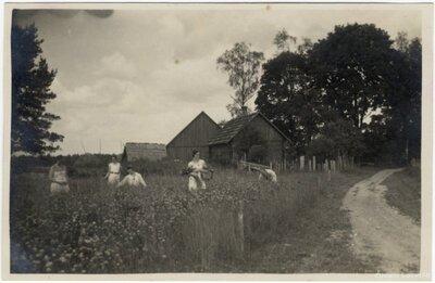 Rembates pagasts. Ogresziedu māju sievietes lasa jāņuzāles