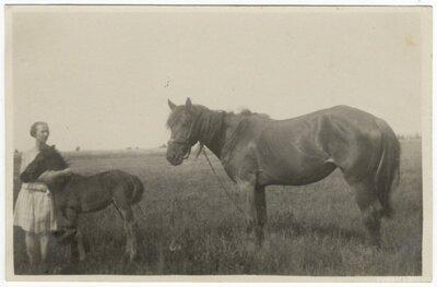 Rembates pagasts. Sieviete ar zirgu un kumeļu pļavā