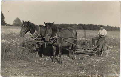 Rembates pagasts. Siena pļaušana ar zirga siena pļaumašīnu Ogresziedu pļavā