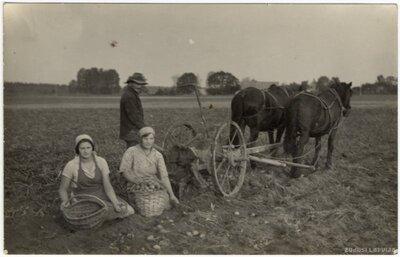 Rembates pagasts. Kartupeļu novākšana ar zirgu velkamo mašīnu