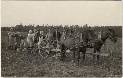 Rembates pagasts. Kartupeļu talcinieki laukā pie kartupeļu novācamās mašīnas