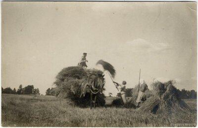 Rembates pagasts. Siena kraušana vezumā Ogresziedu zemnieku saimniecības pļavā