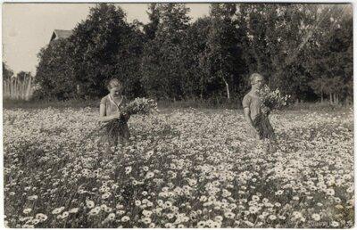 Rembates pagasts. Sievietes lasa margrietiņas pļavā pie Ogresziedu mājām