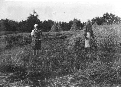 """Veclaicenes pagasts. Mājvieta  """"Mišas"""". Rudzu pļauja"""