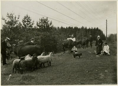 Butnēru māju gani