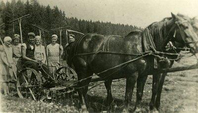 Priekuļu pagasts. Priekuļu lauksaimniecības skolas audzēkņi prakses laikā