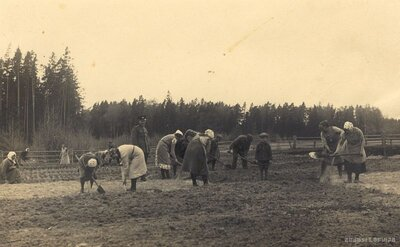 Medzes pagasts. Zemes sagatavošana meža sēšanai