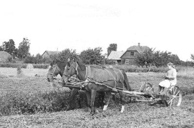 """Salas pagasts. Birži.  Āboliņa pļauja saimniecībā """"Geidāni"""""""