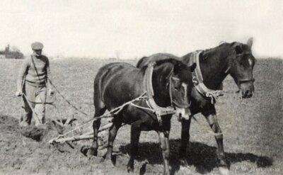 Alberts Geidāns ar divjūgu arklu Geidānu tīrumā