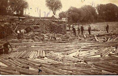 Kokmateriālu pludināšana Salacas grīvā