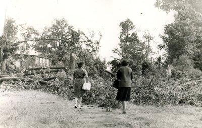 Vētras postījumi Kokmuižas parkā