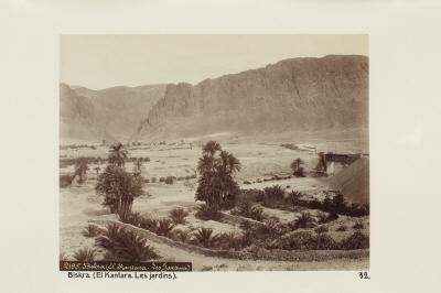 Fotografi. Trädgårdarna i El Kantara. Biskra, Algeriet.