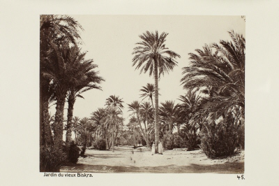 Fotografi. Jardin du vieux Biskra. Algeriet.