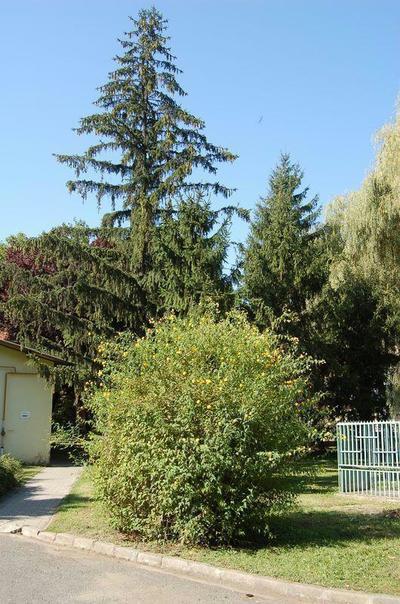 Gyula, Pándy Kálmán Kórház parkja