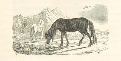 Image from page 325 of Voyage en Islande et au Groënland, exécuté pendant les années 1835 et 1836 sur la Corvette La Recherche ... dans le but de découvrir les traces de La Lilloise. Publié ... sous la direction de M. P. G. (Histoire du voyage par M. P. G.)