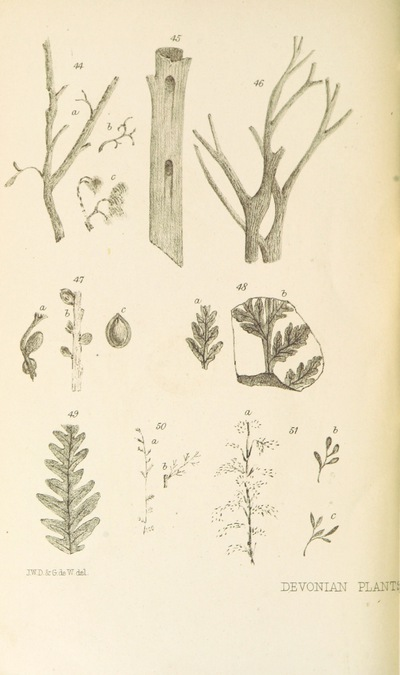 Image from page 54 of On the Flora of the Devonian Period in North-Eastern America. (From the Quarterly Journal of the Geological Society.)