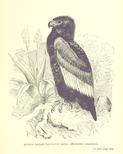Image from page 163 of The Hunter's Arcadia [i.e. South Africa]