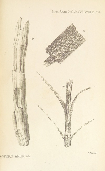 Image from page 55 of On the Flora of the Devonian Period in North-Eastern America. (From the Quarterly Journal of the Geological Society.)