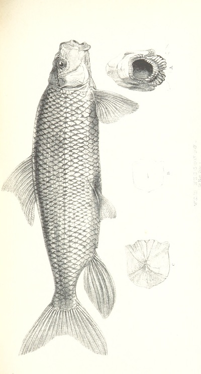 Image from page 565 of Narrative of the Arctic Land Expedition to the mouth of the Great Fish River, and along the shores of the Arctic Ocean, in the years 1833, 1834, and 1835 ... Illustrated by a map and plates