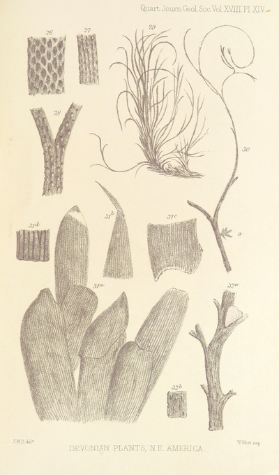 Image from page 49 of On the Flora of the Devonian Period in North-Eastern America. (From the Quarterly Journal of the Geological Society.)