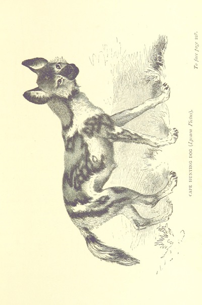 Image from page 277 of The Hunter's Arcadia [i.e. South Africa]