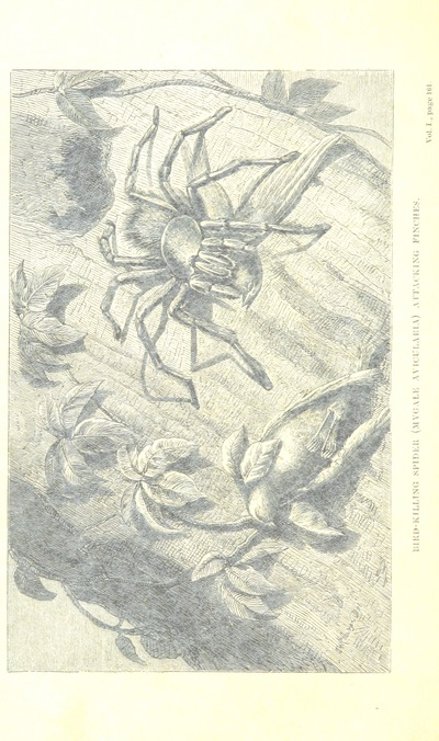 Image from page 182 of The Naturalist on the River Amazons. A record of adventures, habits of animals, sketches of Brazilian and Indian life, and aspects of nature under the Equator, during eleven years of travel