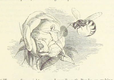 Image from page 187 of [Midsummer Eve: a fairy tale of love.]