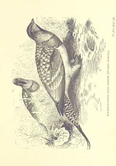 Image from page 67 of The Hunter's Arcadia [i.e. South Africa]