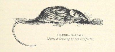 Image from page 397 of Travels in Africa during the years 1875-1878 (1879-1883-1882-1886) ... Translated from the German by A. H. Keane ... Illustrated